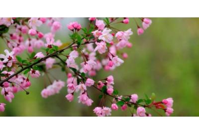 Защита плодовых деревьев от грызунов