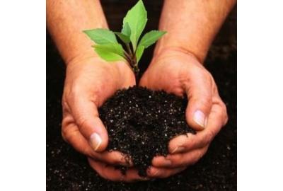 Пять правил удачной посадки плодовых деревьев и кустарников осенью