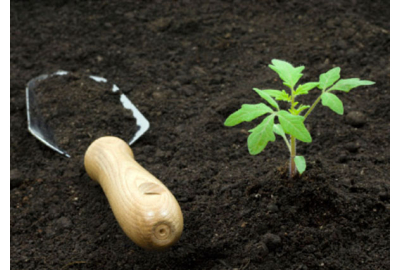 Способы восстановления плодородия почвы